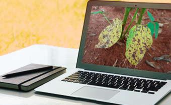 [Slides do Webinar]Manejo de doenças no vegetativo de soja sob ambiente tropical