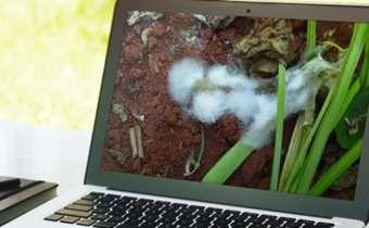 [Slides do Webinar] Manejo de <em>Fusarium sp</em>. e <em>Sclerotinia sclerotiorum</em> em feijoeiro irrigado