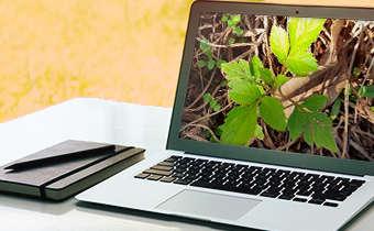 [Slides do Webinar] Novas tecnologias para tolerância de culturas a herbicidas através da transgenia: novas ...