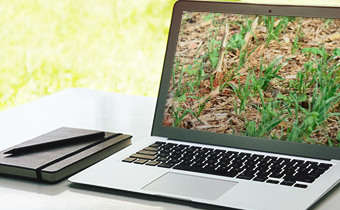 [Slides do Webinar] Manejo de plantas daninhas em culturas de inverno