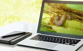 [Slides do Webinar]Manejo de lagartas em soja e milho