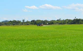 Tecnologia de aplicação de fungicidas em arroz irrigado