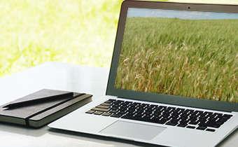 Slides do Webinar Transmissibilidade de patógenos para semente de cereais de ...