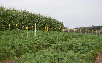 Treinamento Técnico: Conhecendo os fungicidas e melhorando a eficiência de controle de doenças em soja ...